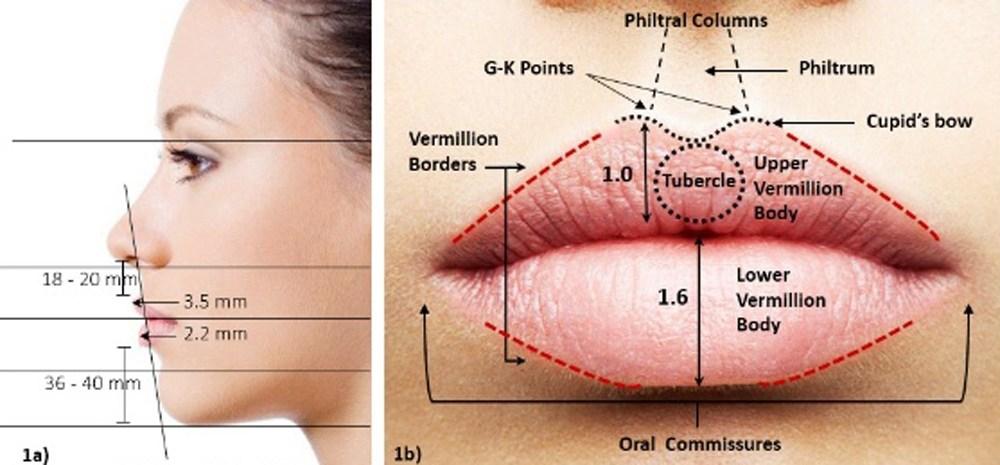 ลักษณะกายวิภาคสัดส่วนของริมฝีปากที่สวยงาม